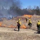 Albany Pine Bush Preserve prescribed burns