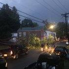 Rensselaerville catalpa tree fallen
